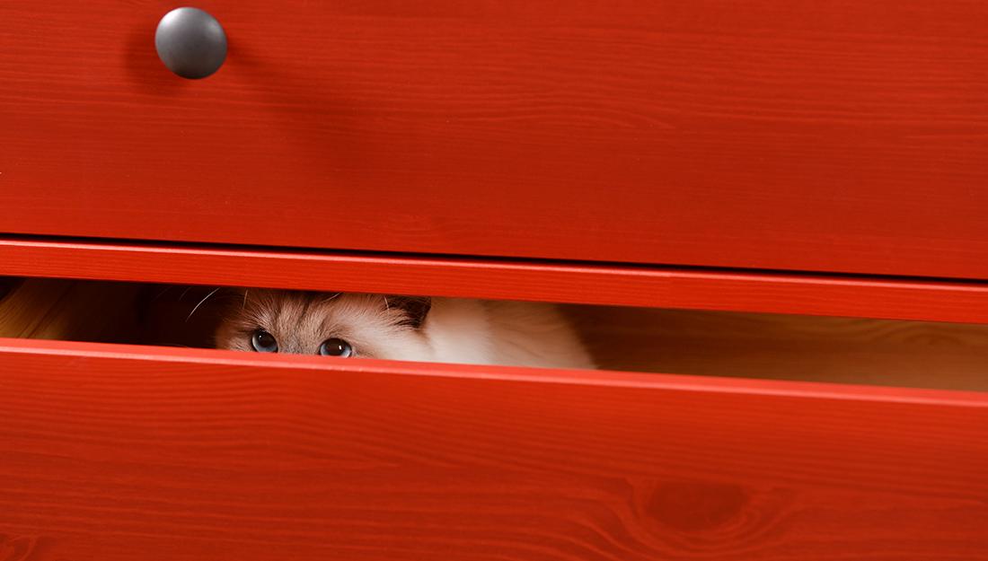 cat hiding in drawer