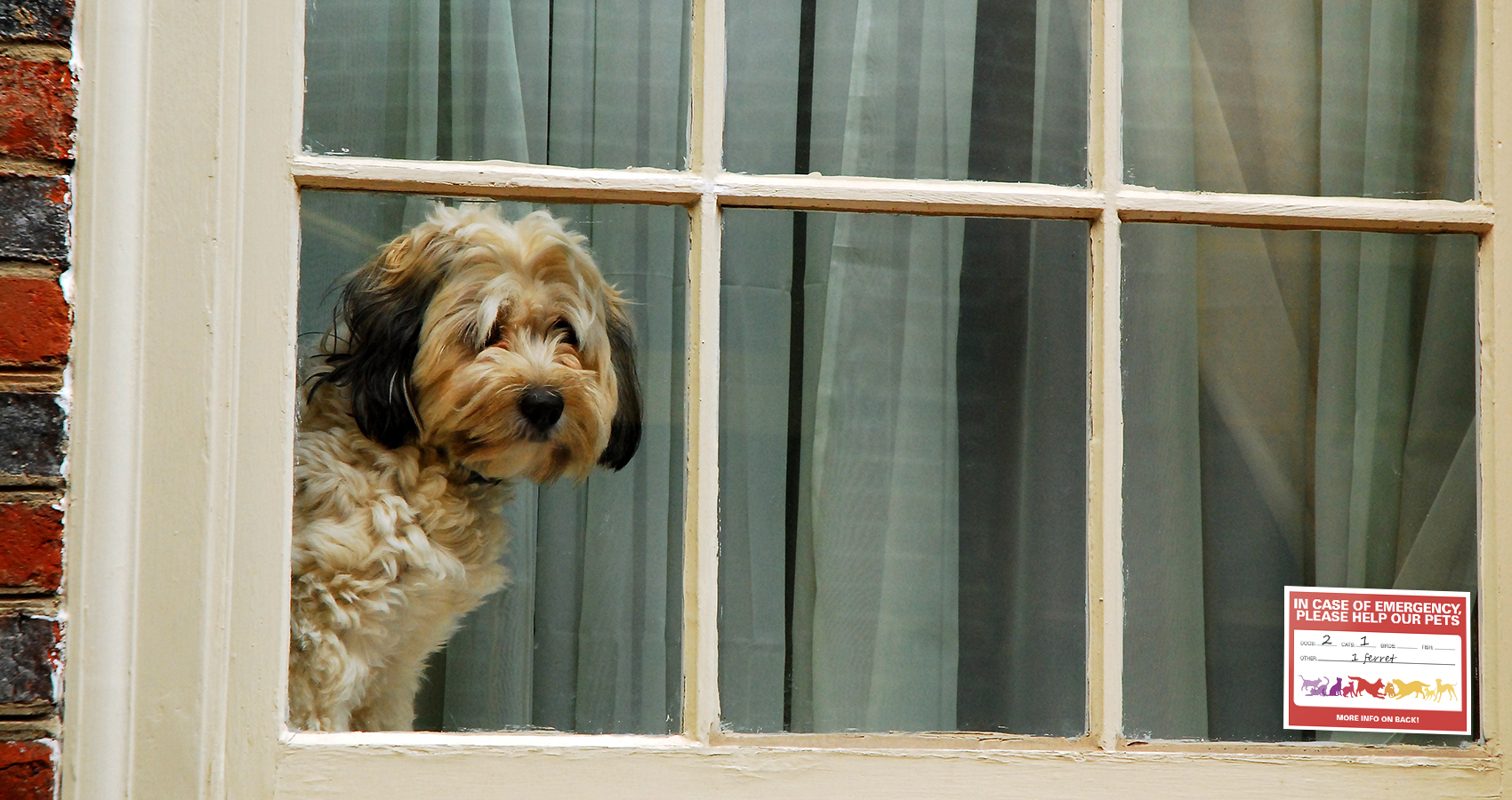 dog at window with pet alert card