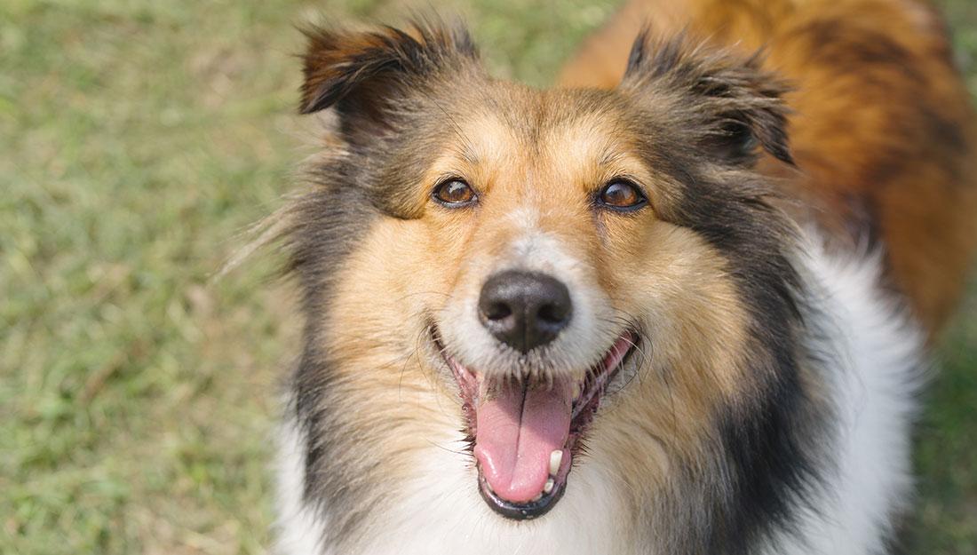 happy dog body langauge