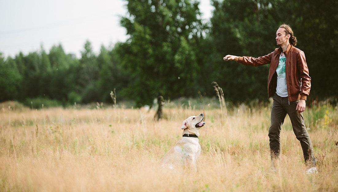 dog training outdoors