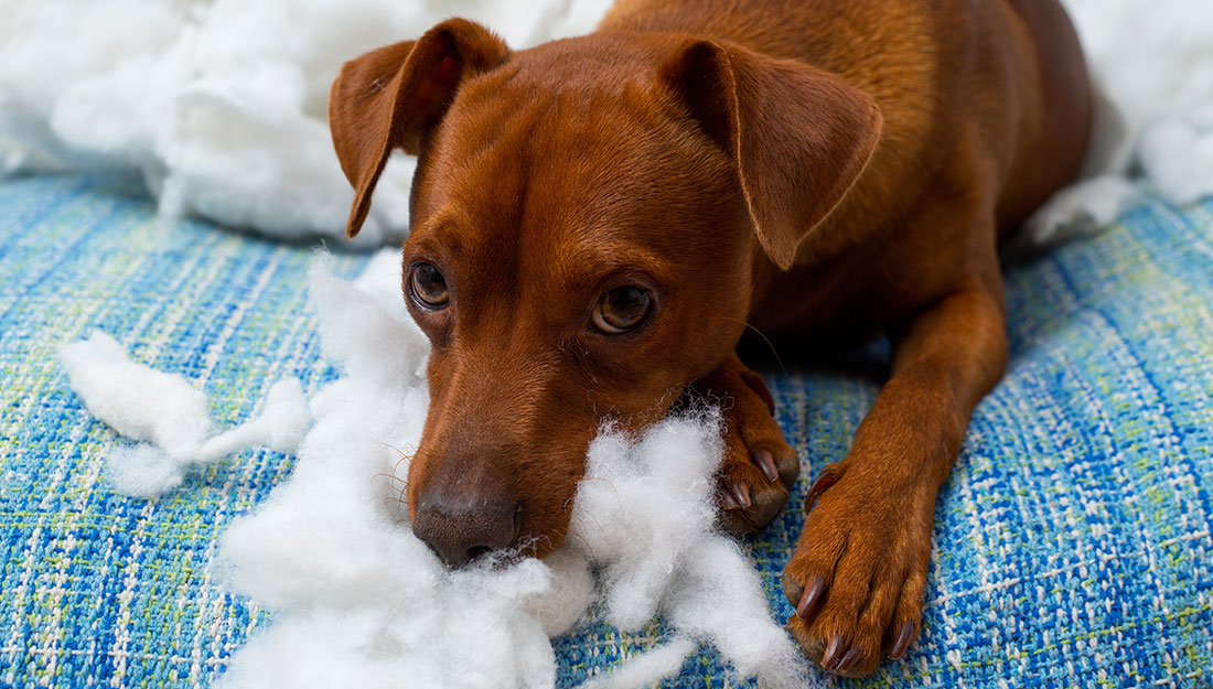 dogs need rules for behavior