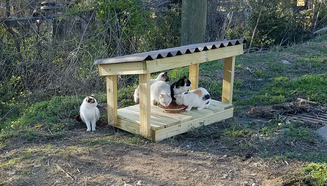 outdoor cat feeding station