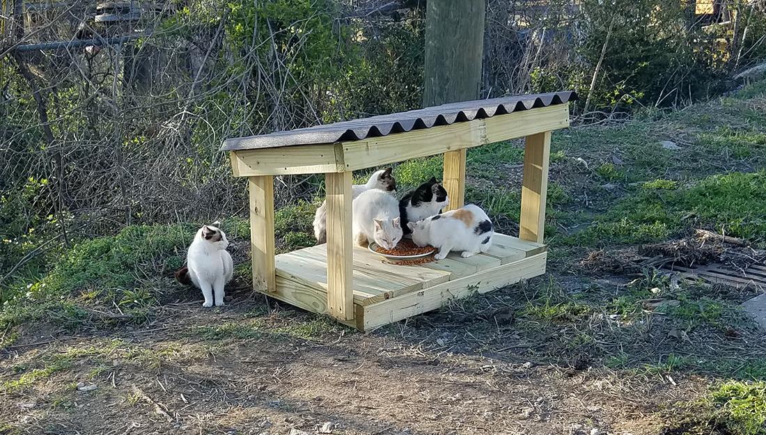 outdoor cat feeding station