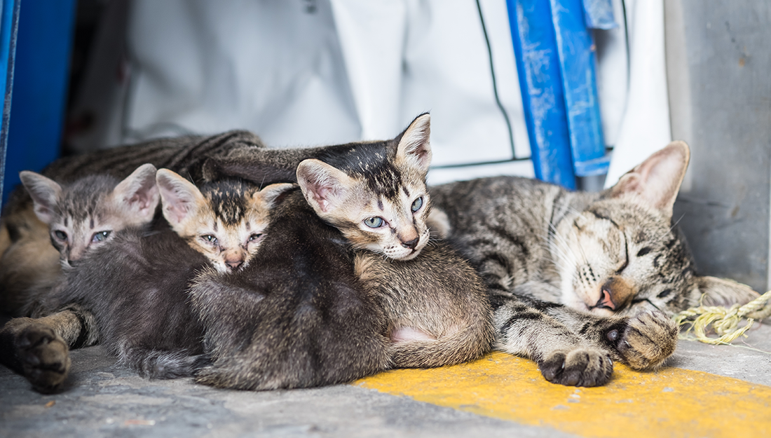 homeless cat with kittens
