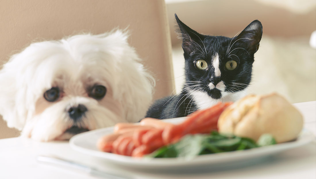 dog and cat looking at plate of food