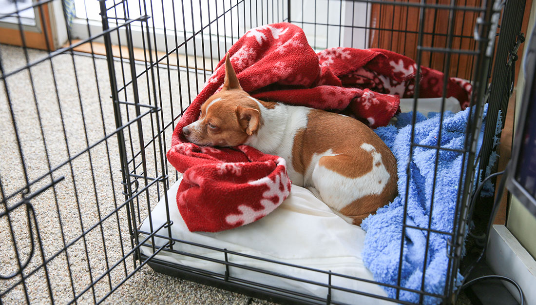 dog comfortable in crate