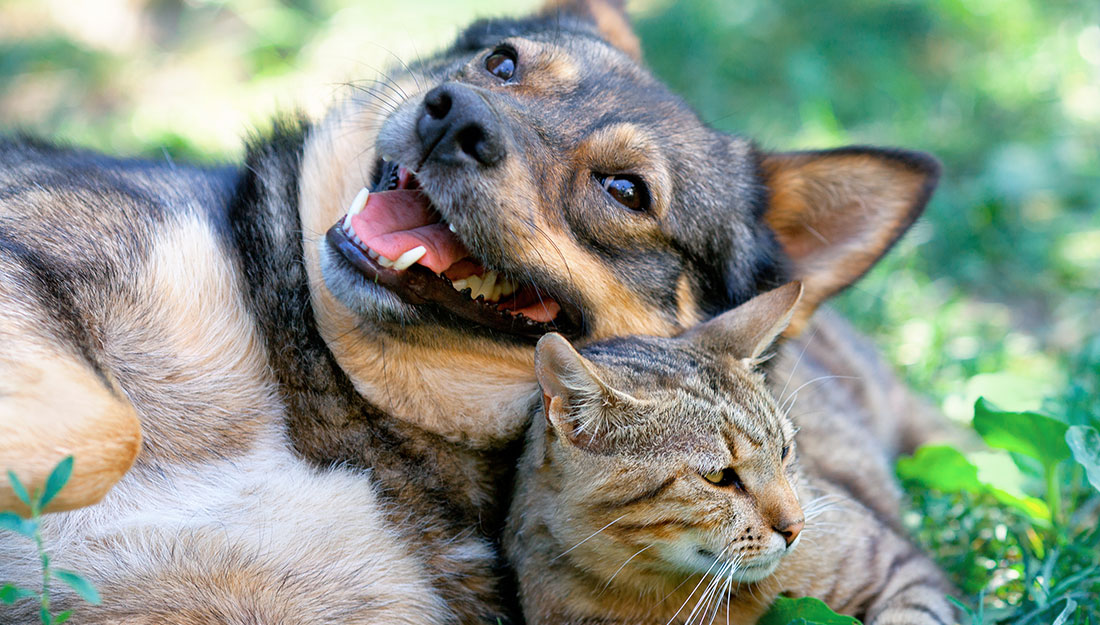 dog and cat in yard
