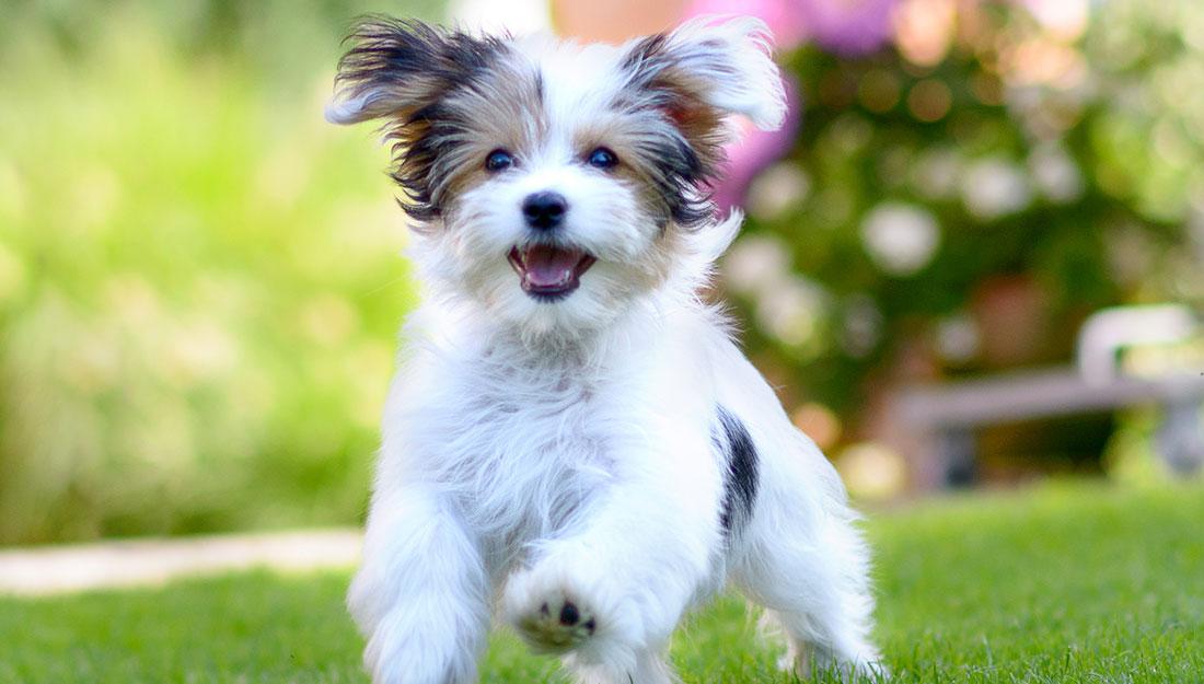 a dog enjoying pet-friendly green space