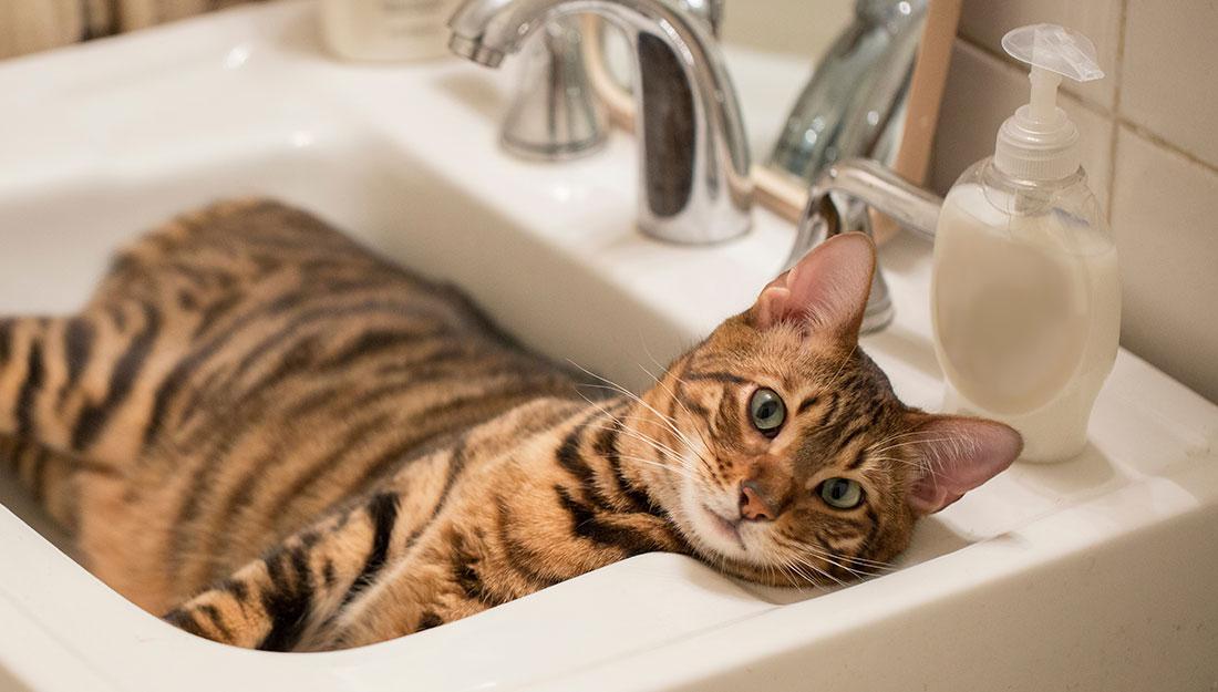 cat in bathroom sink