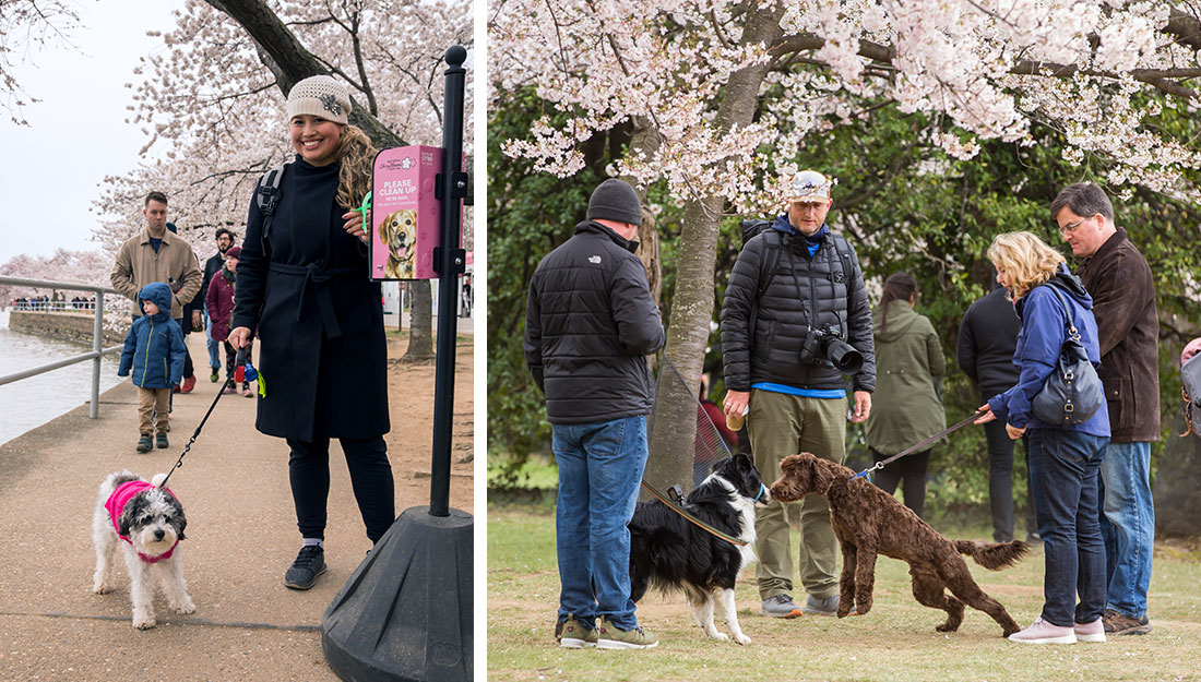 Pets at National Cherry Blossom Festival