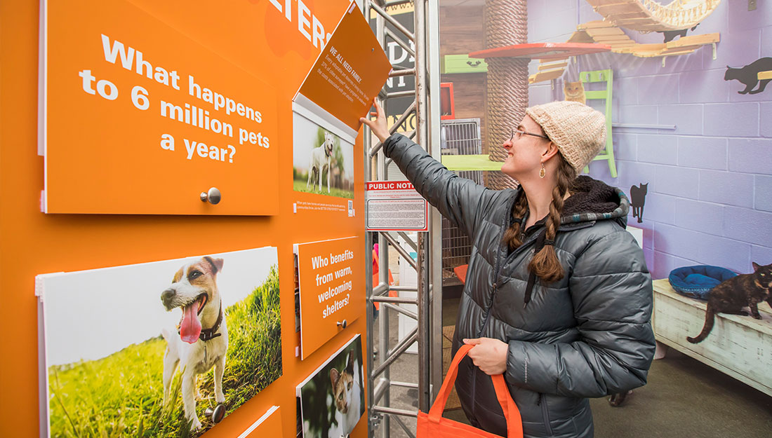 Learning about Pet-Friendly Cities
