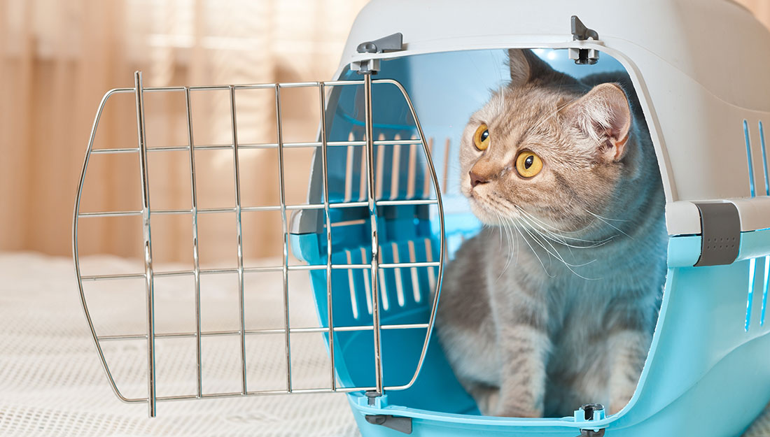 Disaster Preparedness: Cat in crate