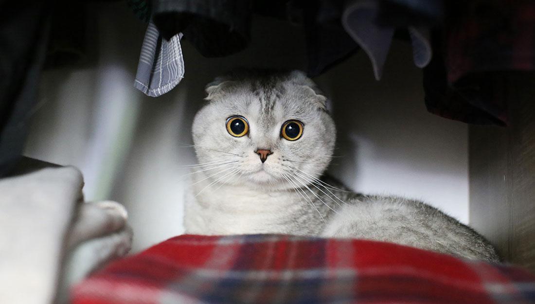 Disaster Preparedness: Cat hiding in closet