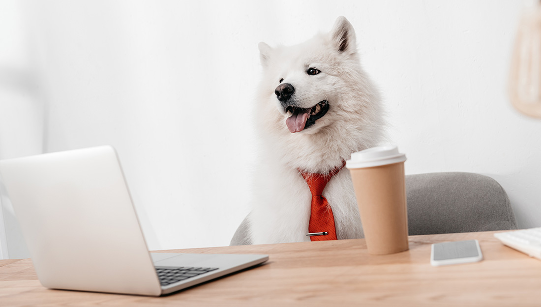 Dog in a tie sitting at a business table