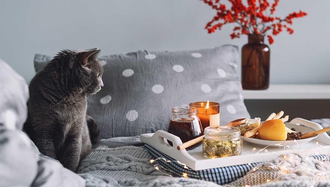 cat sitting near lit candle