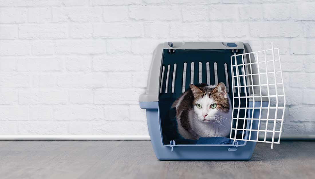 Cat crate near door for easy evacuation