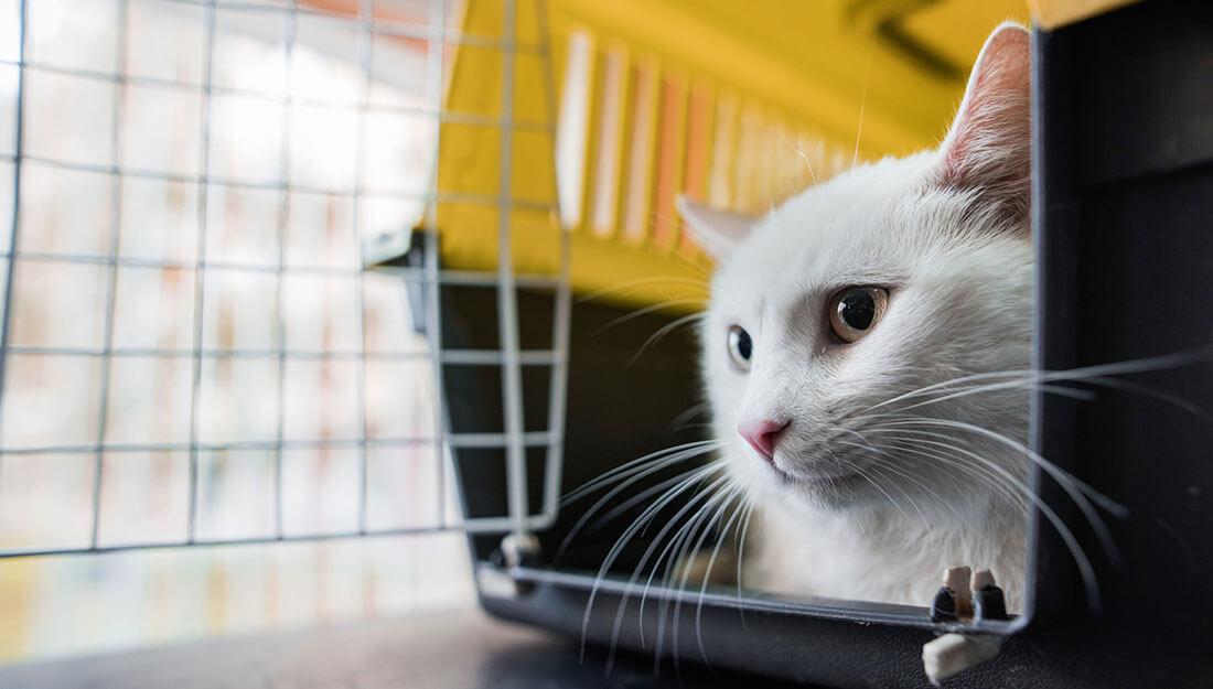 cat in her carrier