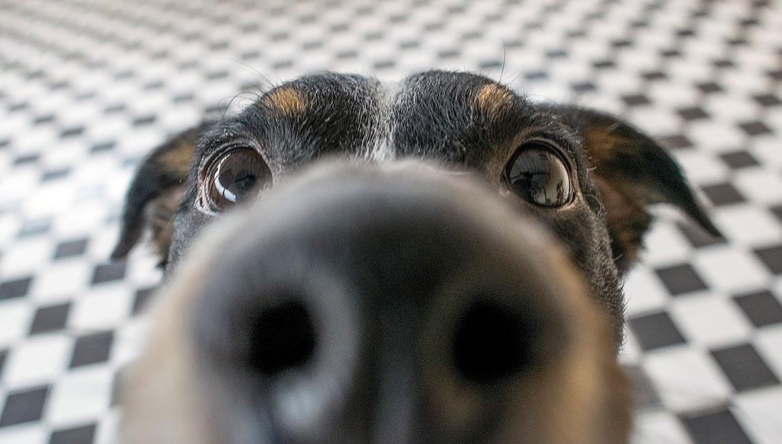 a cute dog saying hello