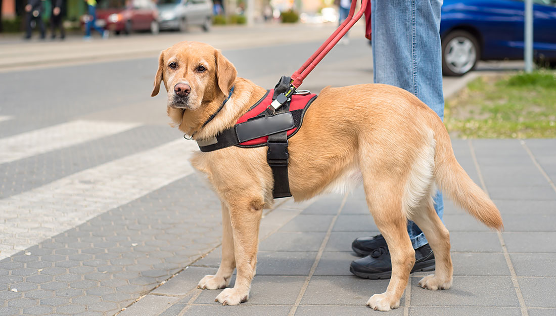 crossing street with service dog