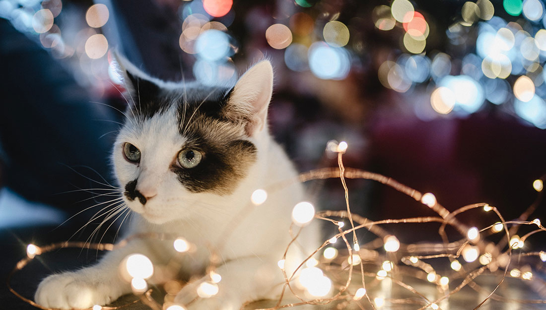 cat under holiday tree
