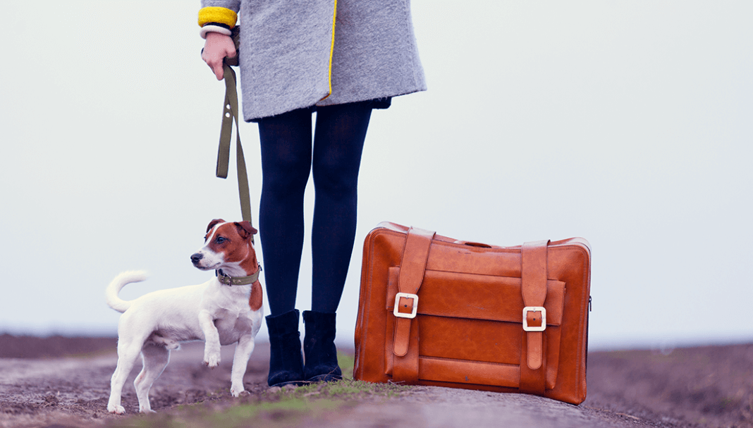 woman, dog and suitcase