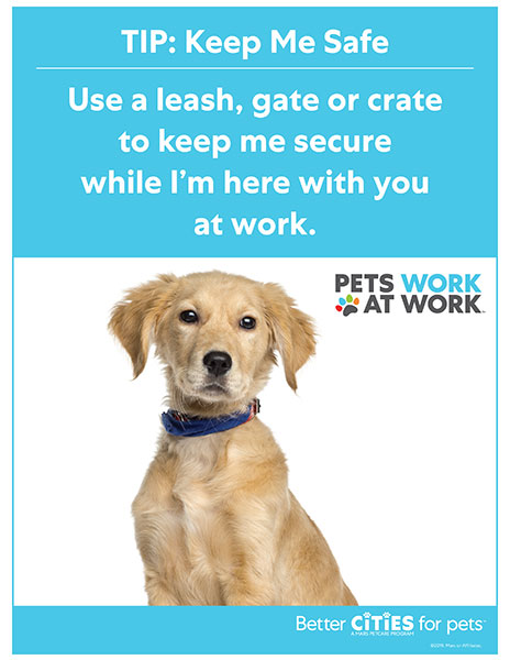 Pet-friendly workplace tip poster - dog only.