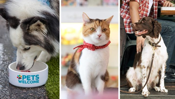 Image result for pet business images