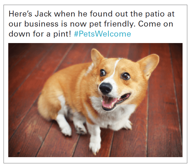 social media post about restaurant that welcomes pets