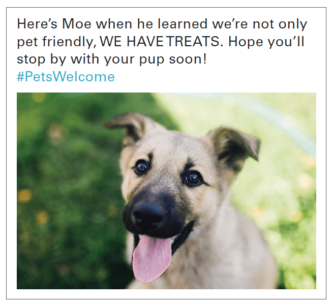 social media post about store that welcomes pets
