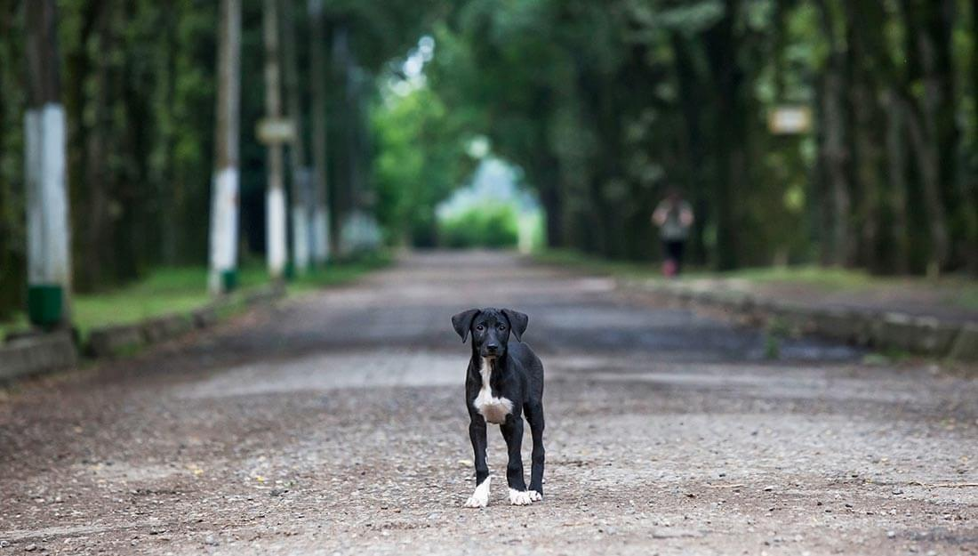 Lost dog standing in the street