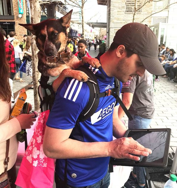 Man taking the city assessment survey on a tablet with a dog in a carrier on his back