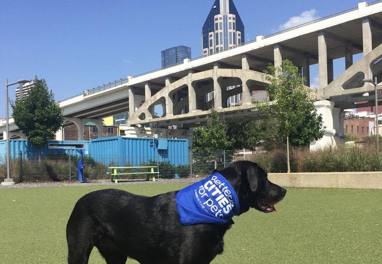 dog at city dog park