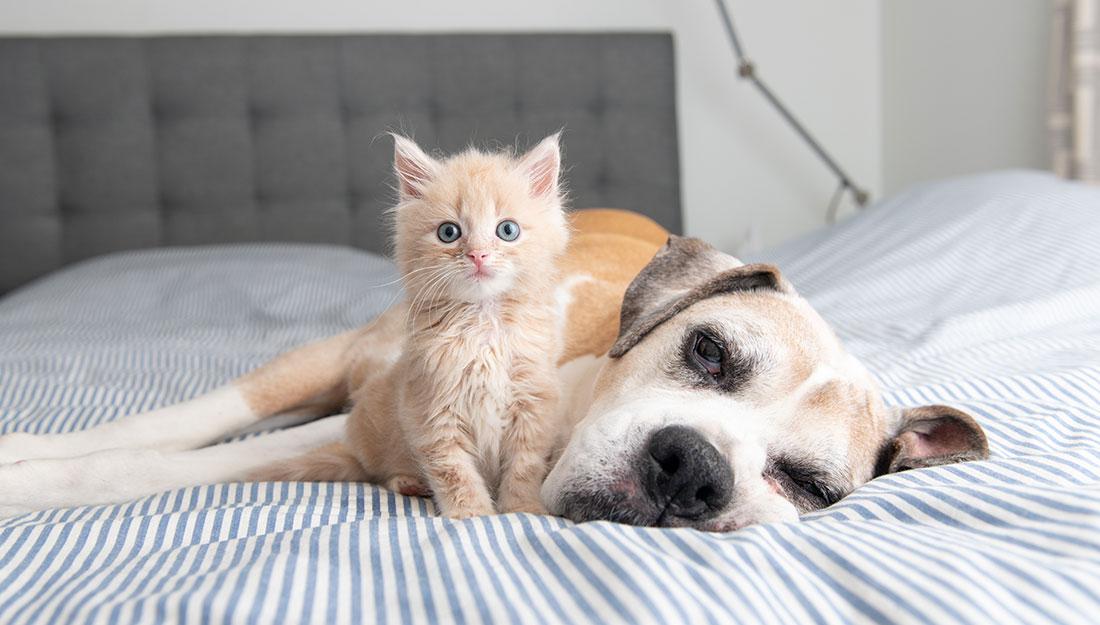 older dog with kitten