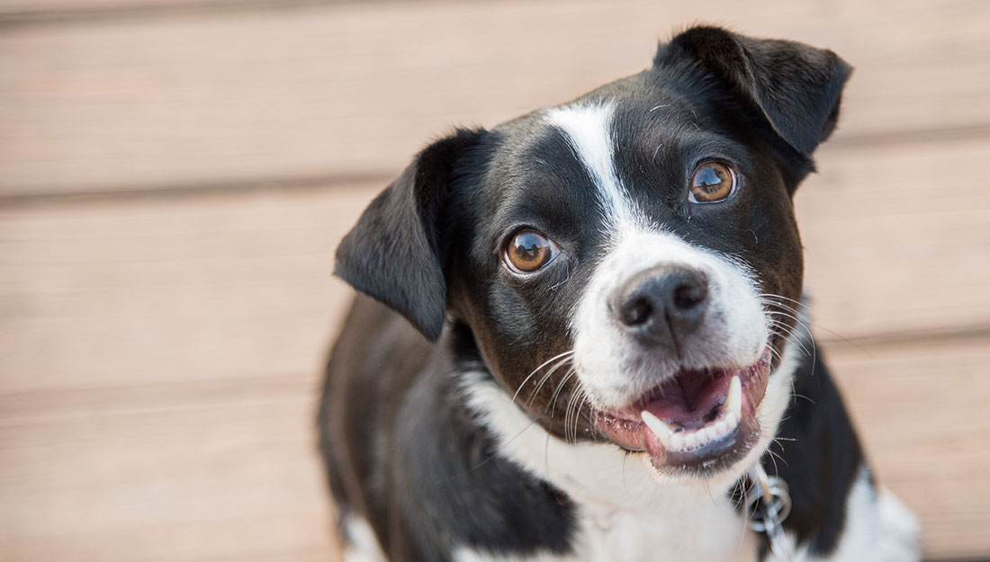happy dog smiling at camera