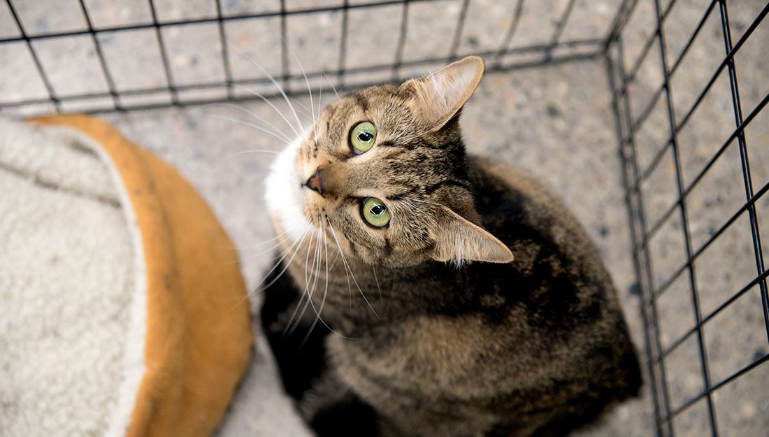 cat looking up from inside cage at an adoption center