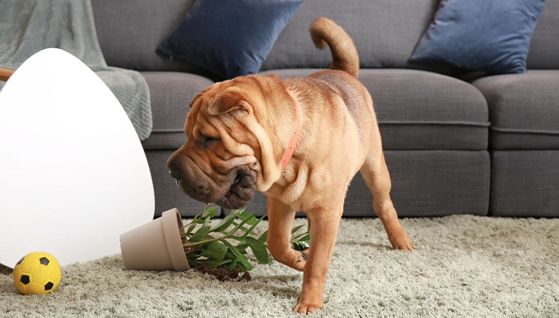 dog that has knocked over a plant