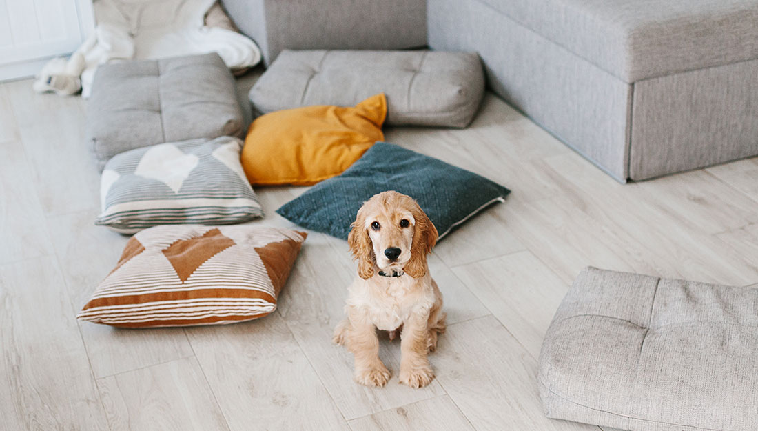 dog with scattered pillows in living room