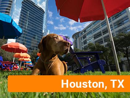 Dog on grass near downtown Houston