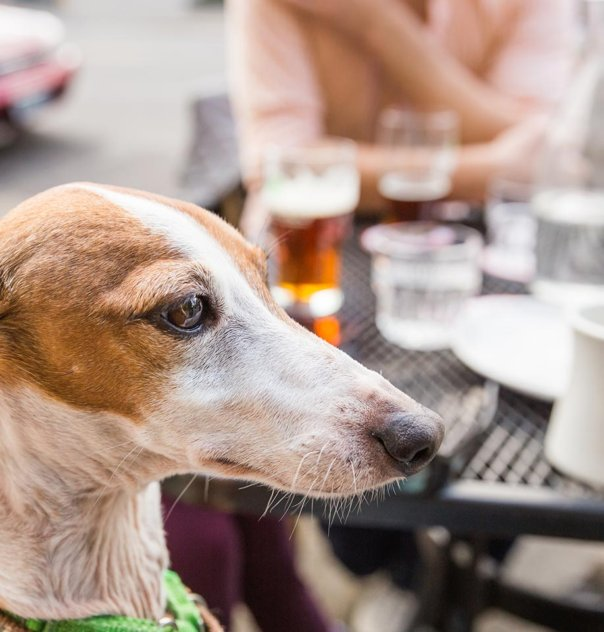 Dog at outdoor cafe