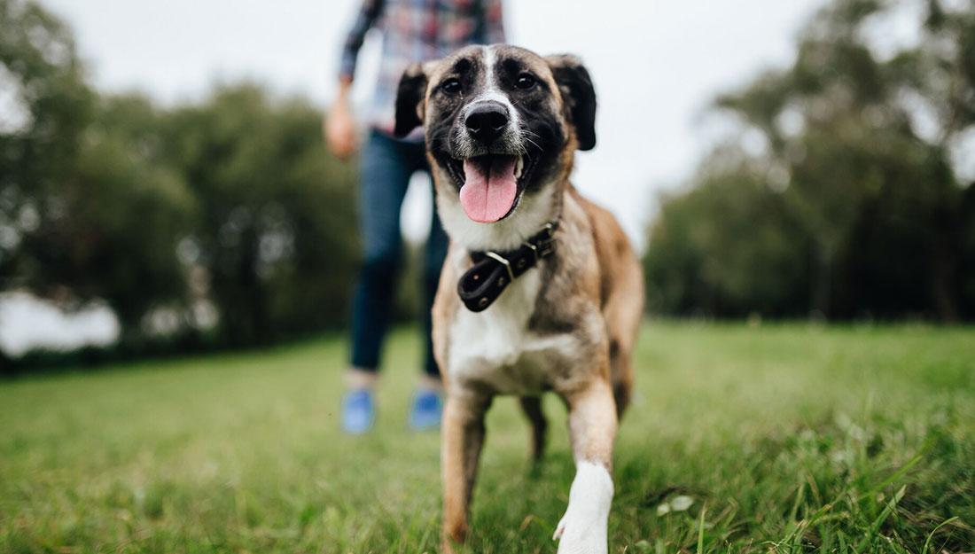 happy dog running in park
