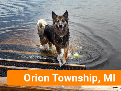 Dog in lake in Orion Township