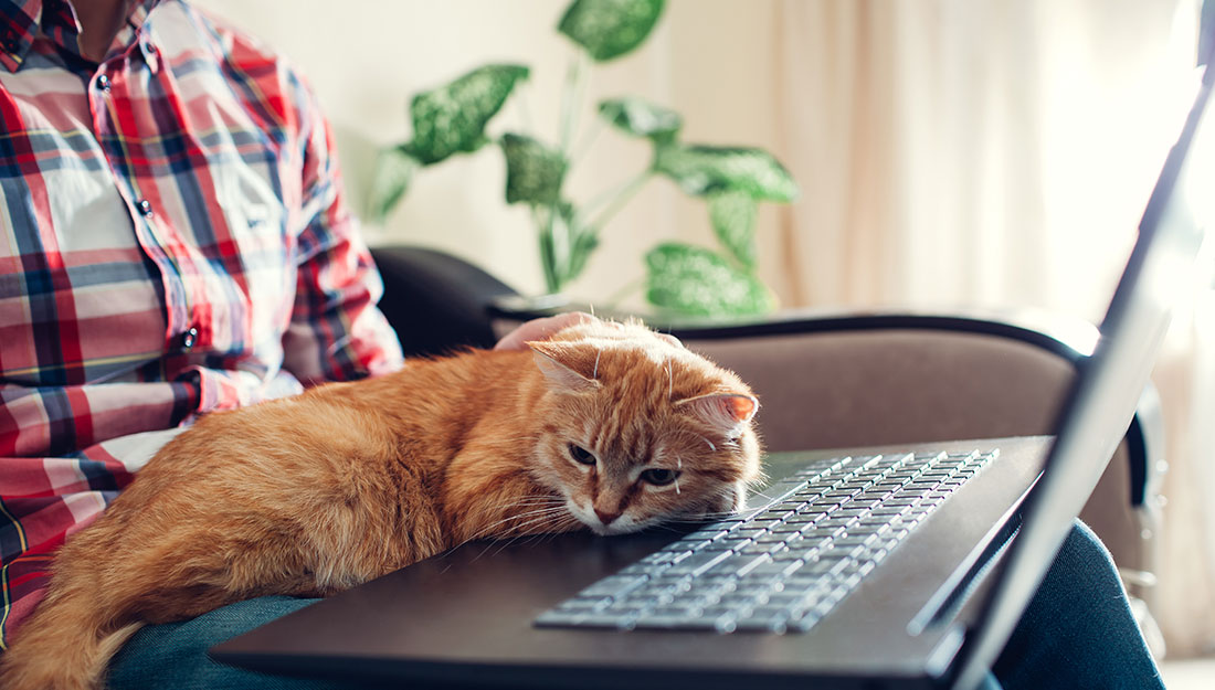 Cat napping on computer