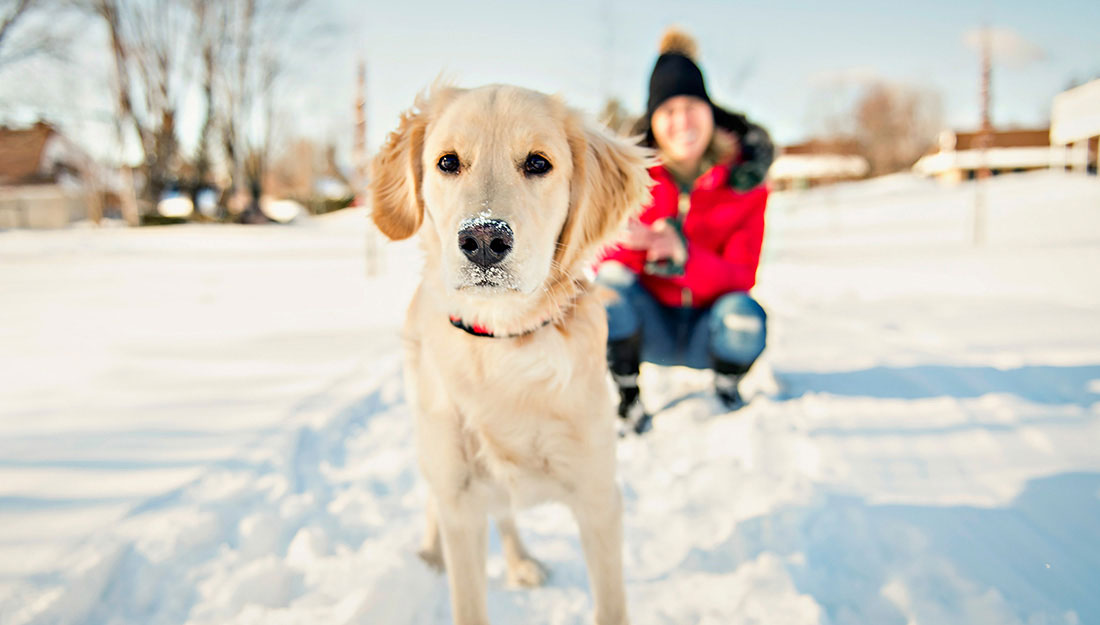 walking with dog in the snow