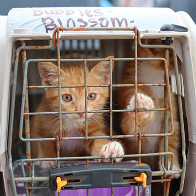 a cat ready for transport